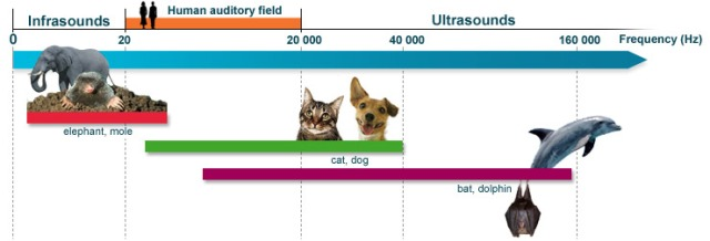 frequency-hearing-range-in-man-and-some-common-animal