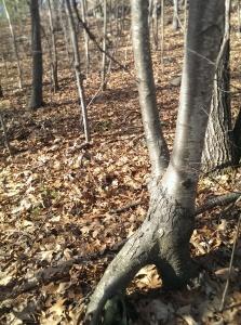 tree as x